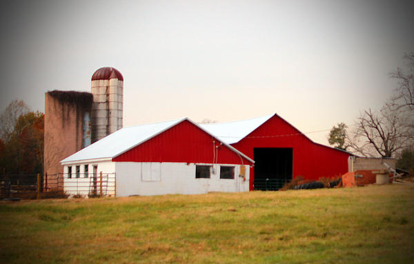 Cynthia Guinn - Red And White Barn