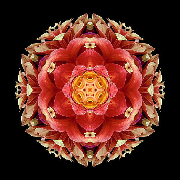 Red And Yellow Dahlia IIi Flower Mandala Print by David J Bookbinder