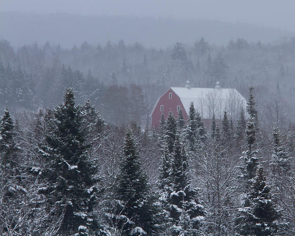 Red Barn In Maine Print by Jack Zievis