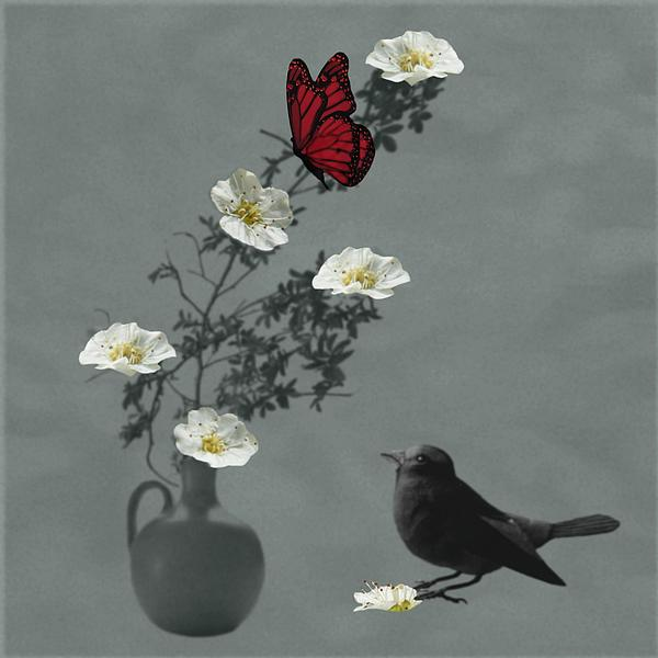 Red Butterfly In The Eyes Of The Blackbird Print by Barbara St Jean