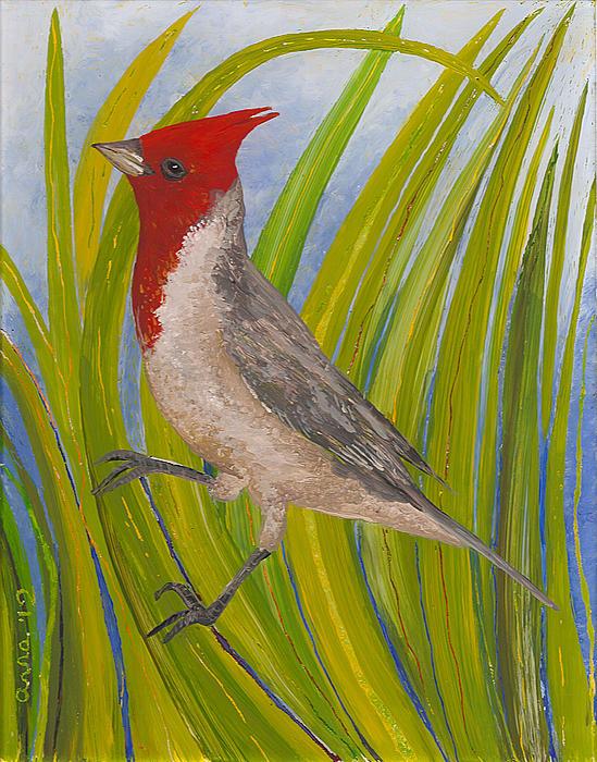 Red-crested Cardinal Print by Anna Skaradzinska