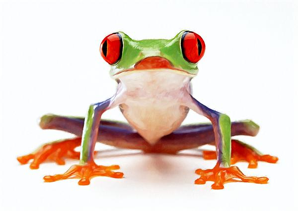 Red-eye Tree Frog 2 Print by Lanjee Chee
