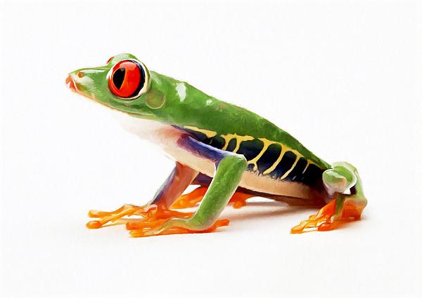 Red-eye Tree Frog 4 Print by Lanjee Chee