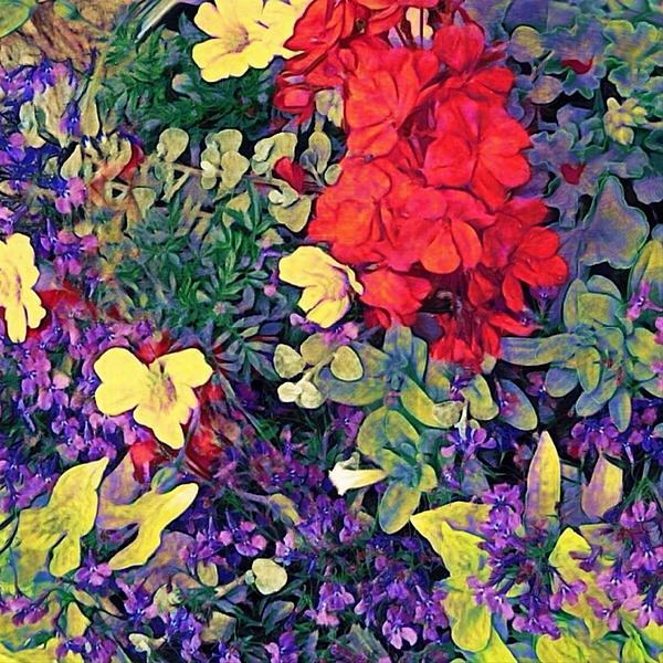 Lyn Voytershark - Red Geranium with Yellow and Purple Flowers - Square
