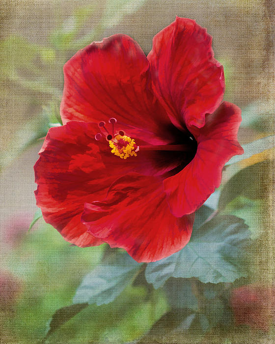 Tessa Fairey - Red Hibiscus - digital paint
