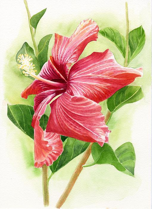 Red Orange Hibiscus Print by Sharon Freeman