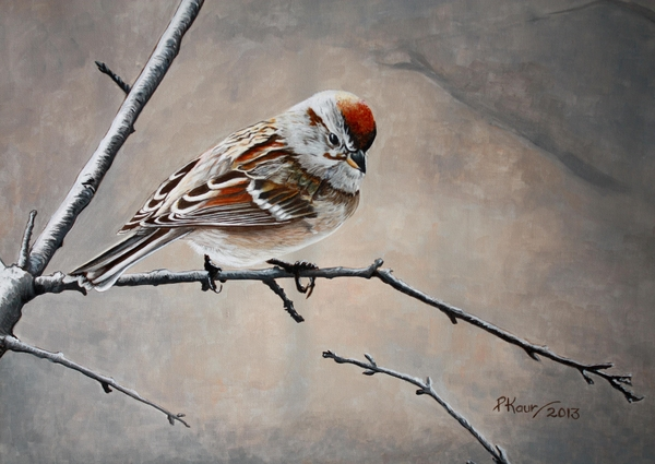 Red Poll Print by Pam Kaur
