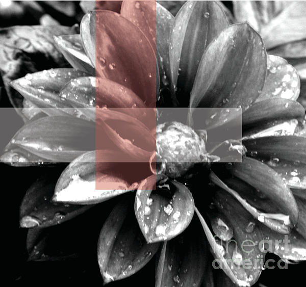Red Rain Blossom Print by Jamie Lynn