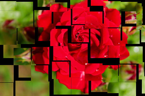 Red Rose Puzzle Print by Julia Fine Art And Photography
