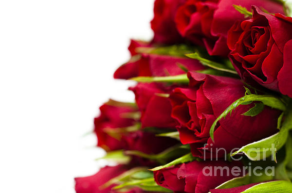 Red Roses Print by Anne Gilbert