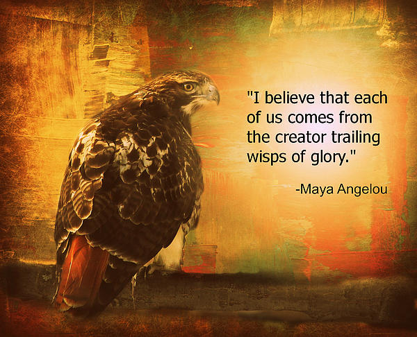 Aurelio Zucco - Red-Tailed Hawk with Maya Angelou Quote