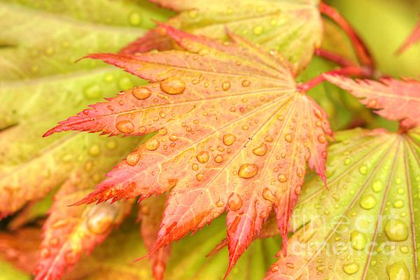 Marcia Fontes Photography - Red Tip Leaf