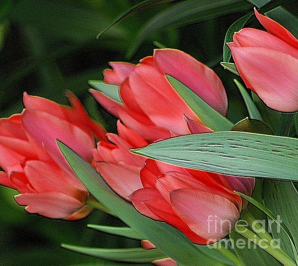 Kathleen Struckle - Red Tulips