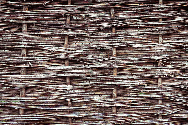 Reed Fence Print by Tom Gowanlock