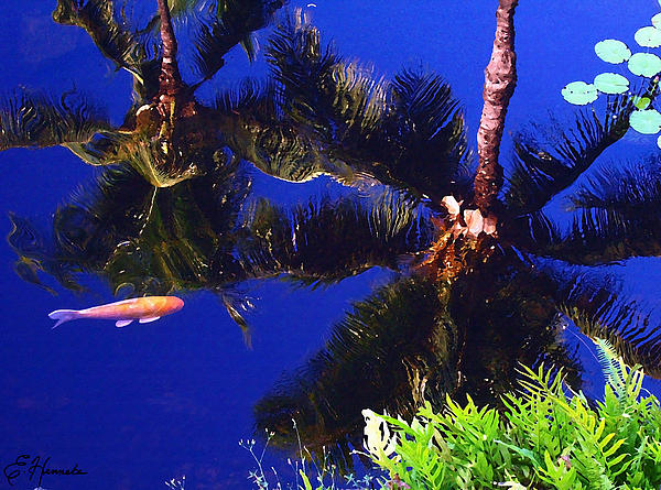 Reflection In The Koi Pond Print by Ellen Henneke