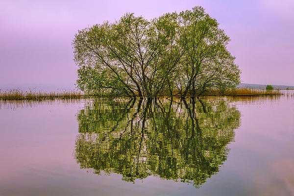 Reflection Of A Tree Print by Yavuz Sariyildiz