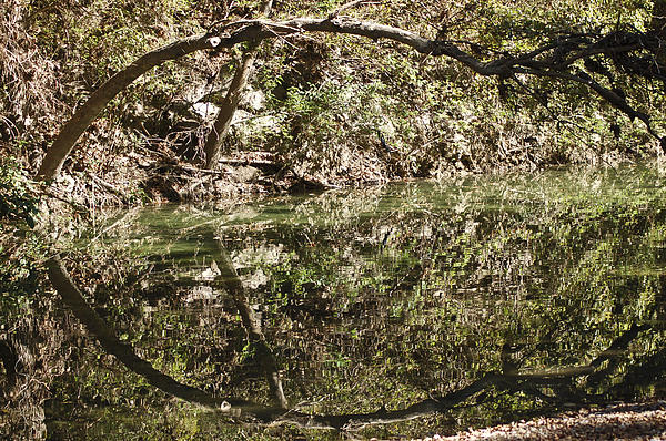 Teresa Dixon - Reflection