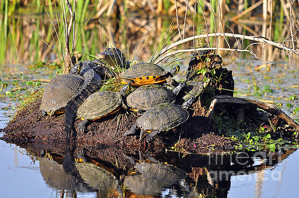 Reptile Refuge Print by Al Powell Photography USA