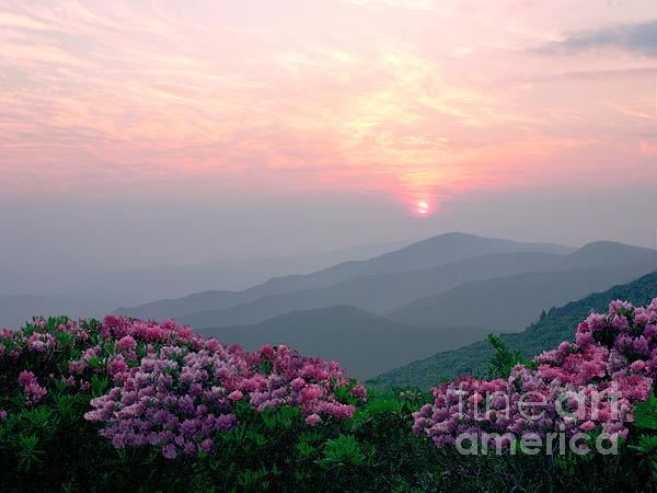 Annlynn Ward - Rhododendron Sunrise