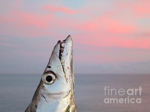 Ribbonfish At Sunrise Print by Patricia Januszkiewicz