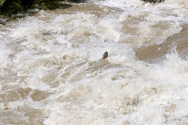 Rio Grande Kayaking Print by Steven Ralser
