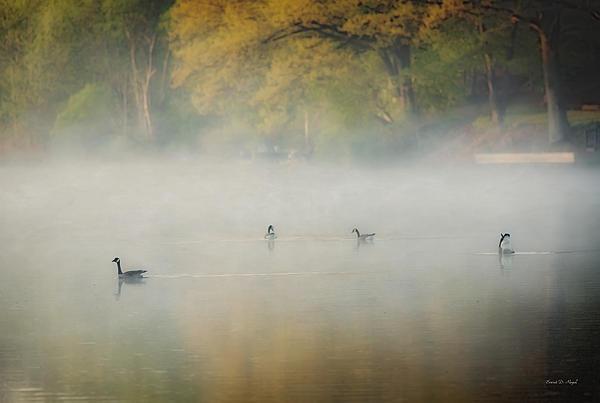 River At Sunrise Print by Everet Regal