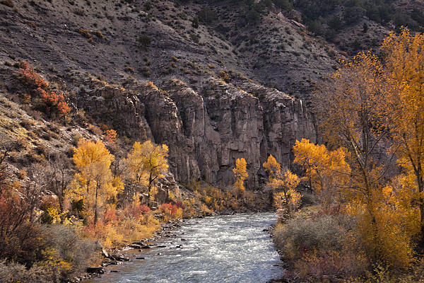 River Through The Aspen Print by David Kehrli