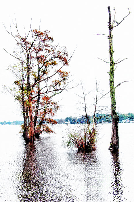 River Trees - Elizabeth City Nc Print by Dan Carmichael