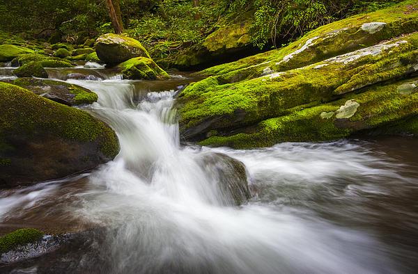Roaring Fork Great Smoky Mountains National Park Cascade - Gatlinburg Tn Print by Dave Allen