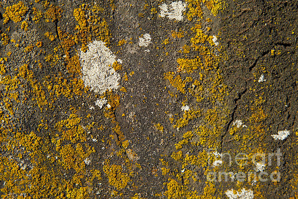 Rock With Lichen Print by Graham Foulkes