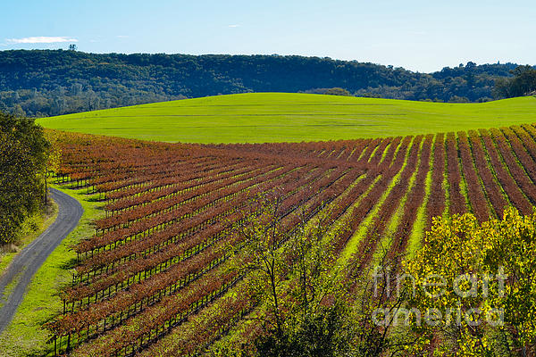 Rolling Hills And Vineyards Print by CML Brown