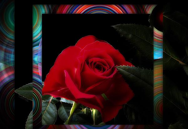 Gabriella Weninger - David - Romance with color