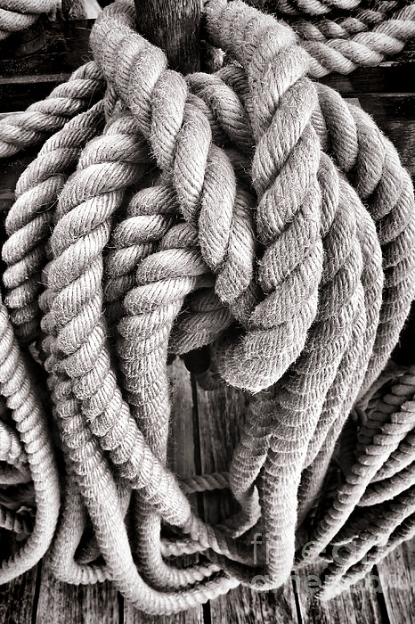 Rope Print by Olivier Le Queinec