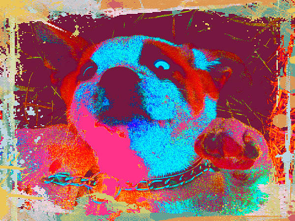 Rosco Belly Up Print by Erica  Darknell