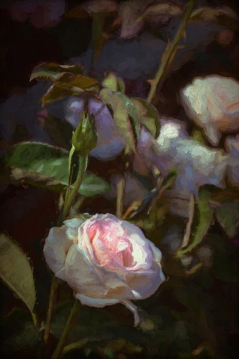 Rose 122 Print by Pamela Cooper