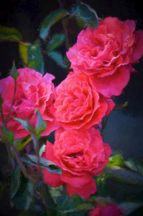 Rose 138 Print by Pamela Cooper