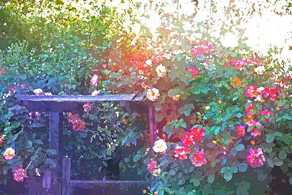 Rose 205 Print by Pamela Cooper