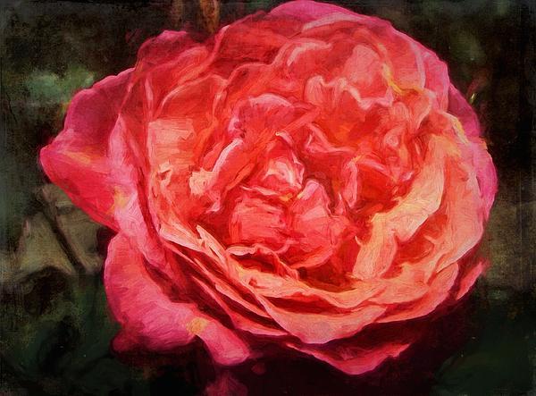 Rose 52 Print by Pamela Cooper