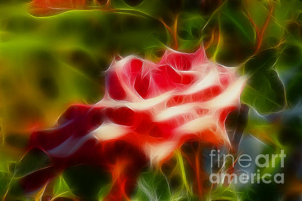 Rose 6168-fractal Print by Gary Gingrich Galleries