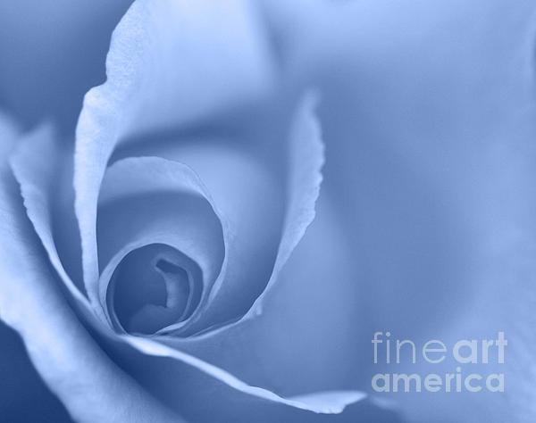 Rose Close Up - Blue Print by Natalie Kinnear
