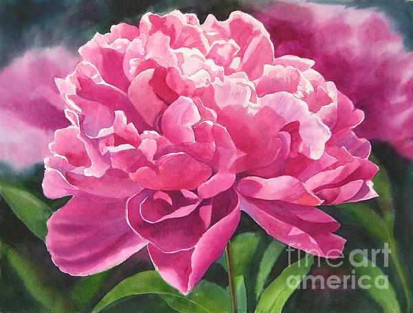 Rose Colored Peony Blossom Print by Sharon Freeman