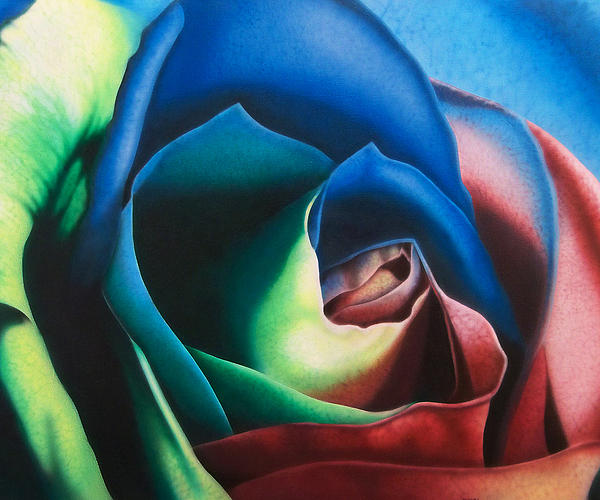 Rose Hybrid Print by Michael Wicksted