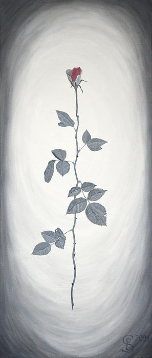 Rose Print by Sven Fischer
