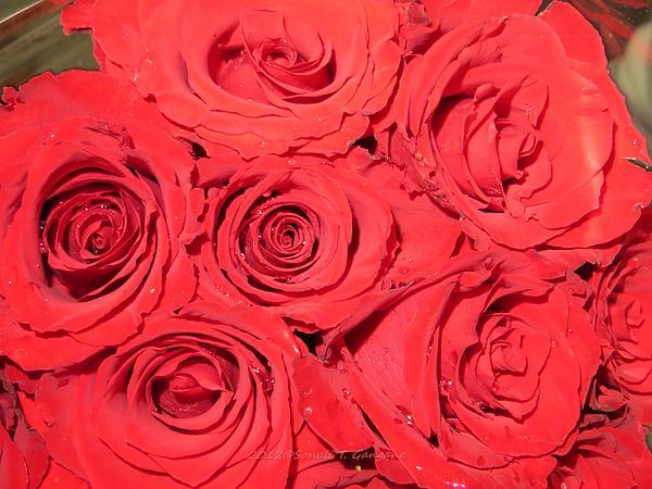 Rose Swirls Print by Sonali Gangane