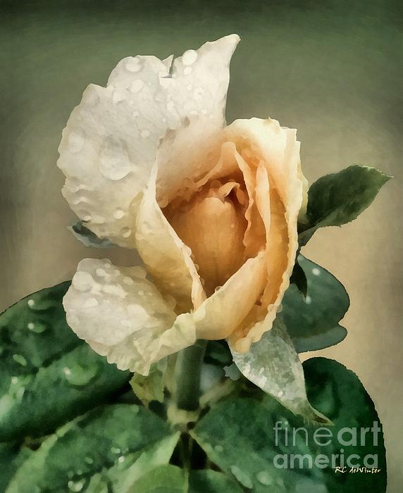 RC DeWinter - Rosebud After The Rain