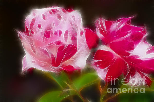 Roses 6221-fractal Print by Gary Gingrich Galleries