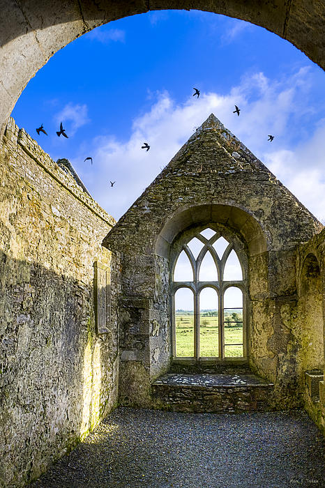 Ross Errilly Friary - Irish Monastic Ruins Print by Mark Tisdale