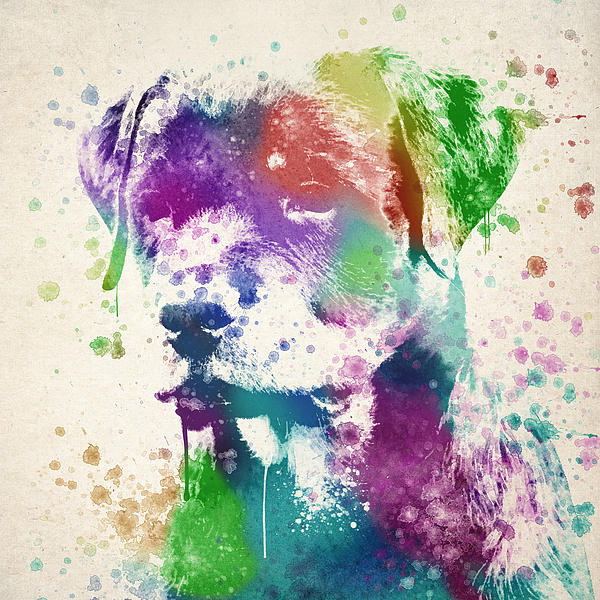 Rottweiler Splash Print by Aged Pixel