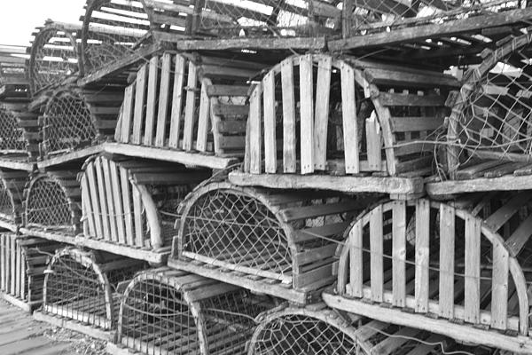 John Telfer - Rows of Old and Abandoned Lobster Traps
