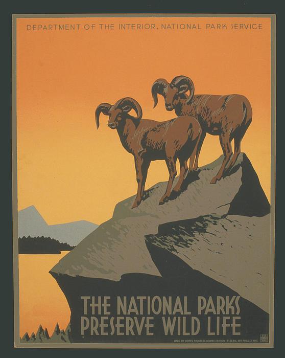 Rreserve Wildlife Print by Unknown